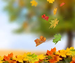 Image result for leaves falling from tree