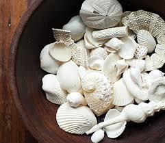 33 Seashell Collection Display Ideas Coastal Decor Ideas