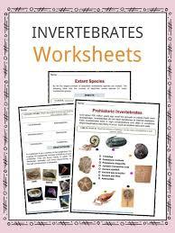 Animal Classification Chart Invertebrates Invertebrate Facts Worksheets Types Specie Information