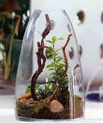 A glass terrarium with plants, small rocks and moss, used for eco style  table