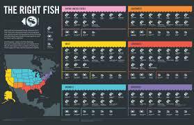 The Right Fish Visual Ly