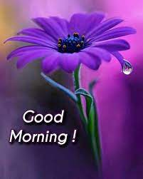 good morning images hd morning wishes