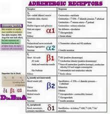 Adrenergic Receptors Chart 7 Best Adrenergic Receptors Images Pharmacology Nursing