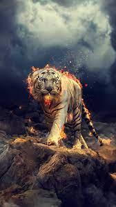 Tiger Wallpaper - KoLPaPer - Awesome ...