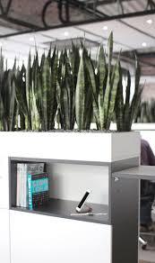 modern office plants. Appcom Marketing \u0026 Interactive | Office Interior Design Plants Partitions Modern Coworking Pinterest Plants,