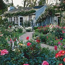 Small Picture Guide to Cottage Gardening Shrub roses Shrub and Cottage garden