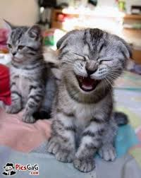 Happy Cat Funny Picture and This Smiling Cat Laughing Cat Smile You via Relatably.com