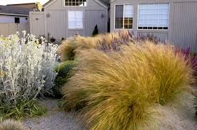 Small Picture Dry Garden Photos Design Ideas Remodel and Decor Lonny