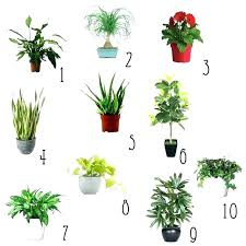 Small plant for office desk Office Workstation Small Plants For Office Small Office Plant Small Plants For Office Desk Flipkart Small Plants For Office Small Office Plant Small Plants For Office