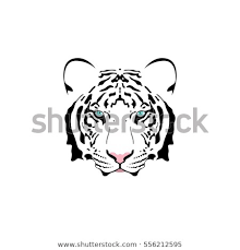 white tiger with blue eyes tattoo. Brilliant Eyes Vector Illustration Of A White Tiger Head With Blue Eye Suitable As Tattoo  Team On White Tiger With Blue Eyes Tattoo
