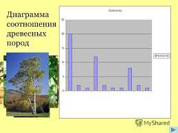 Презентация на тему Взгляд из космоса Мониторинг древесно  9 Диаграмма соотношения древесных пород