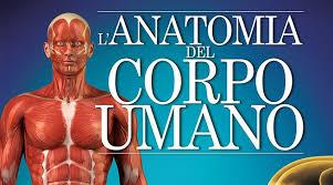 Risultati immagini per anatomia corpo umano immagini