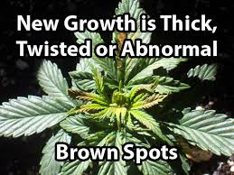 Marijuana Nutrient Problems Symptoms By Picture Grow