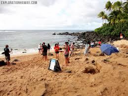 Laniakea Beach A Tourist Favorite For Viewing Turtles