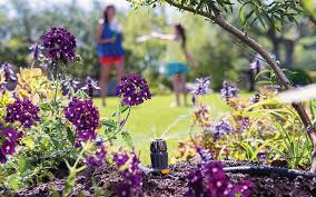 golden rules for watering your garden in summer
