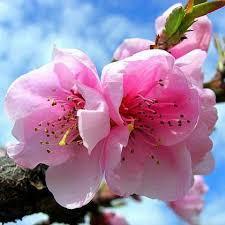 Գնել խոլորձներ Կիևում: Փակ ծաղիկներ առաքմամբ - Flora Life, բույսերի առցանց  խանութ