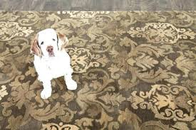pet friendly rugs area weave washable large pet friendly rugs area outstanding magnificent