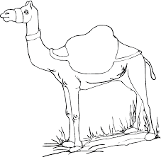Small Picture Camel Coloring Pages Egypt3gif Coloring Pages clarknews