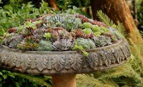 Small Picture Succulent garden design