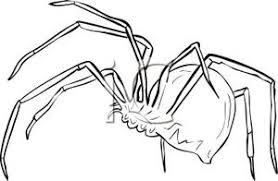 Outline Of A Spider With Huge Abdomen Royalty Free Clipart Picture
