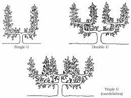 Espaliering Shapes  Woodbridge Fruit TreesFruit Tree Shapes