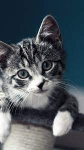 Pin on Mobile/iPhone Cat Wallpapers