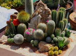 free images nature outdoor growth sunlight desert flower summer fl dry decoration green tropical color natural park fresh botany
