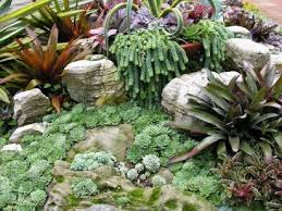 Small Picture 80 best Desert plants images on Pinterest Landscaping Plants