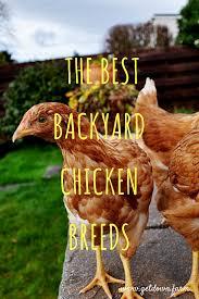 45 Best DIY Backyard Chickens Images On Pinterest  Backyard Backyard Chicken Blog