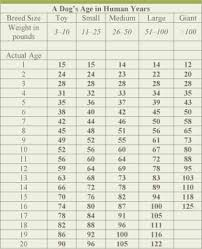 Medium Dog Age Chart The Importance Of Pet Dental Care Advanced Pet Care Of