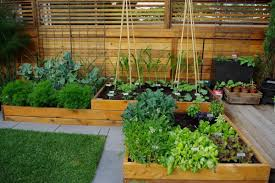 Small Picture Uplifting Your Green Thumb Elevate your garden game with raised