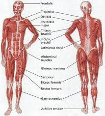 The Body Running Human Body Muscles Human Body Facts