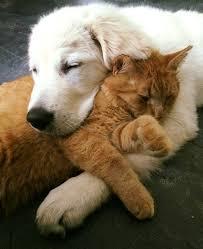 puppy and kitten cuddling. Fine Kitten Tickleskittenmarleypuppycuddlebuddies7 With Puppy And Kitten Cuddling I