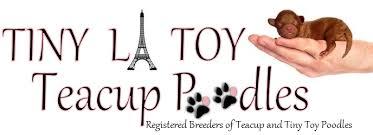 Toy Poodle Weight Chart Tinylatoyteacuppoodles