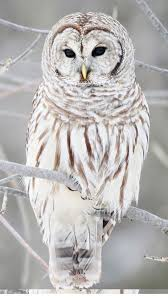 Get cute owl wallpapers for ios latest version. 60 Owl Iphone Wallpapers Ideas Owl Owl Wallpaper Geometric Owl