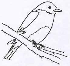 free coloring book page for an eastern bluebird