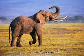 Elephant Desktop Wallpapers ...
