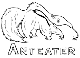 Small Picture Anteater coloring Free Animal coloring pages sheets Anteater