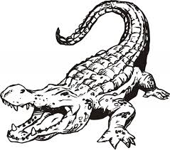 Small Picture Online Alligator Coloring Pages 44 With Additional Coloring Books