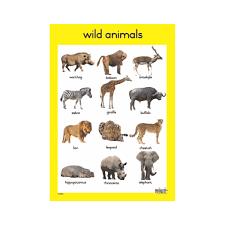 wild animals chart. Brilliant Animals Theme  Wild Animals A3 Single Chart To W