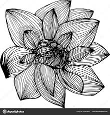 Lotus иллюстрации сделанные от руки линии идея Tattoo векторное