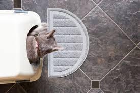 senior cat litter box. Exellent Litter Older Cat Litter Box Problems In Senior M