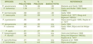 Psilocybin Truffles Vs Mushrooms Whats The Difference
