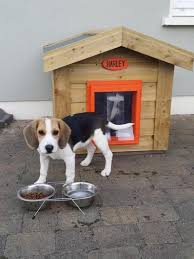 dogs to be kept outside
