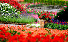 Small Picture Widescreen Beautiful Nature Flowers Garden With Hd Of Computer