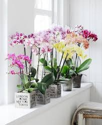 plants feng shui home layout plants. Feng Shui Flower Symbols - Orchids Plants Home Layout