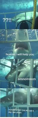 concerned shark