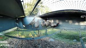 Pheasant Cage Designs Revealed The Reality Of Breeding Cages For Pheasants And Partridges