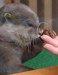 Otter Vending Machine Cool Give Me Your Hand Human And Do Not Pull Away From Me Otterwise