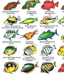 Oahu Fish Chart List Of Fish Of Hawaii Hawaiian Fish Chart